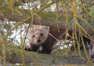 wildlife at Tatuk Lake