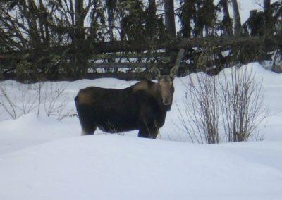 Wildlife at Tatuk Resort