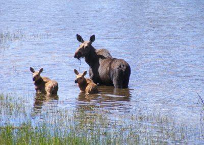 Wildlife at Tatuk Lake Resort